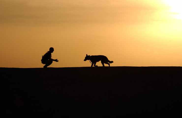 sunset working dog horizon